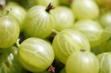 frozen gooseberries